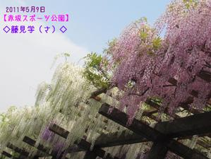 2011_05_09